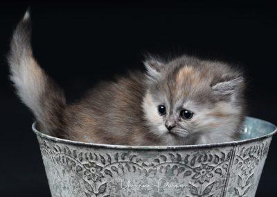 Fotoshooting-Kitten-Daria-Yvonne-Parpan-01