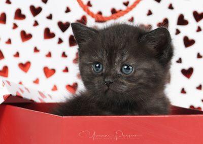 Fotoshooting-Kitten-Daria-Yvonne-Parpan-02