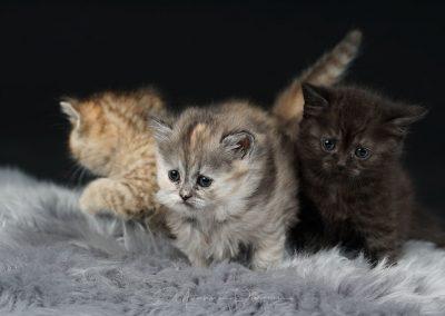 Fotoshooting-Kitten-Daria-Yvonne-Parpan-03