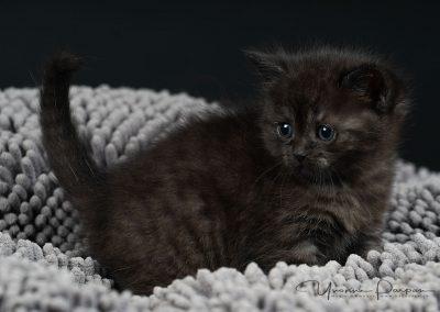 Fotoshooting-Kitten-Daria-Yvonne-Parpan-04