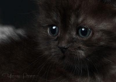 Fotoshooting-Kitten-Daria-Yvonne-Parpan-05