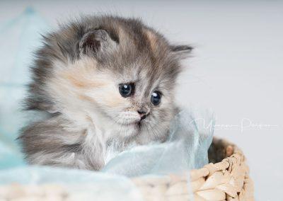 Fotoshooting-Kitten-Daria-Yvonne-Parpan-06