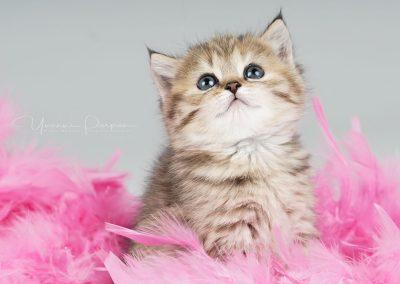 Fotoshooting-Kitten-Daria-Yvonne-Parpan-08