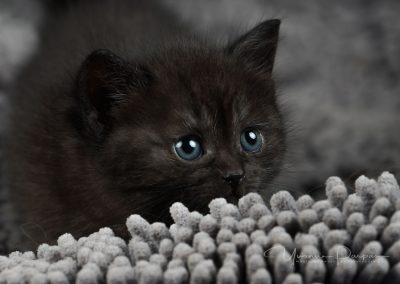 Fotoshooting-Kitten-Daria-Yvonne-Parpan-10
