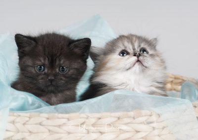 Fotoshooting-Kitten-Daria-Yvonne-Parpan-11