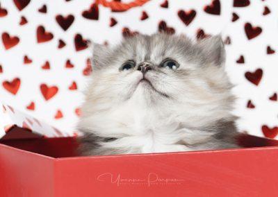 Fotoshooting-Kitten-Daria-Yvonne-Parpan-12