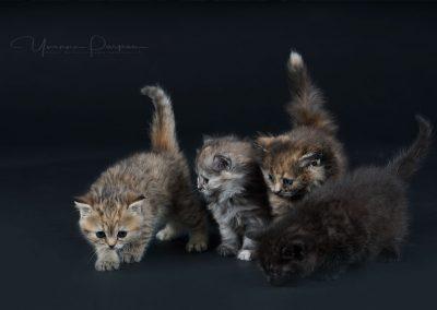 Fotoshooting-Kitten-Daria-Yvonne-Parpan-13
