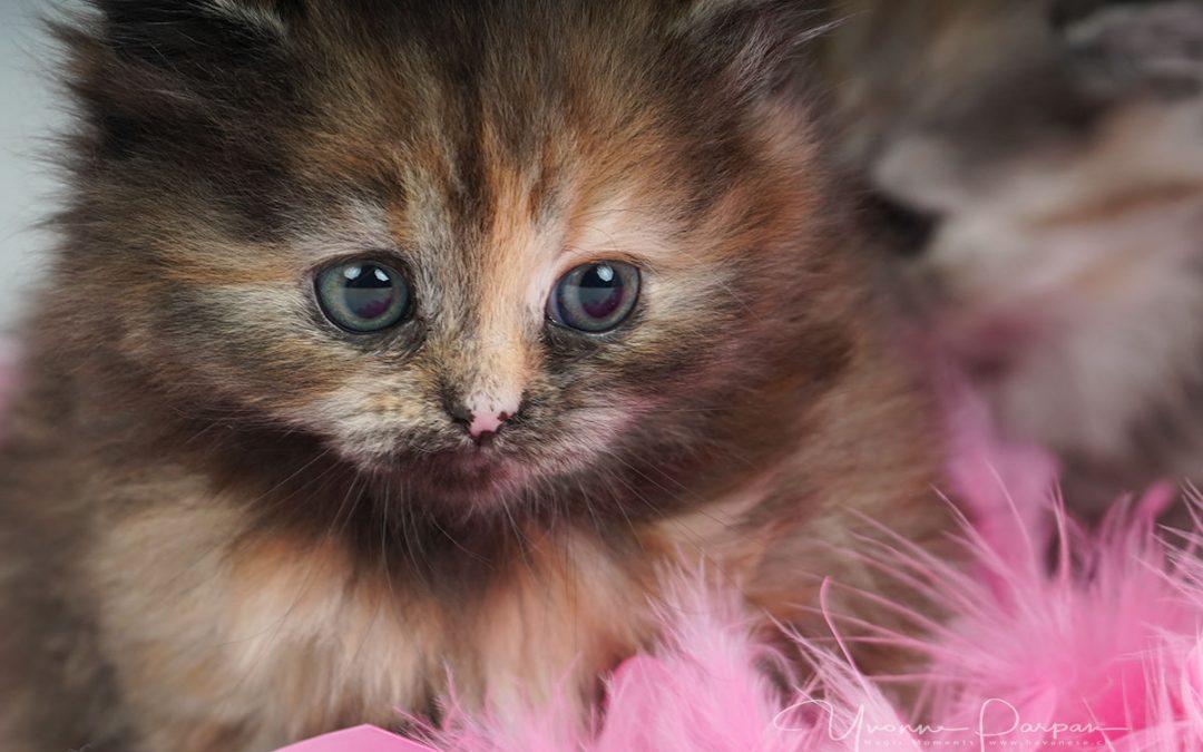 Fotoshooting mit Daria und ihren süssen Kitten